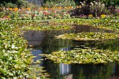 在一个湖的浪端的白色泡沫百合在一个植物园里 库存图片