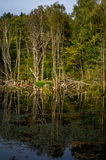 在一个湖的秋天风景在中央俄罗斯 库存图片