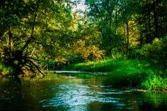 在一个湖的秋天风景在中央俄罗斯 免版税库存照片