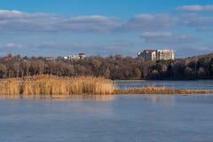 在一个湖的芦苇在多云天空下 库存图片