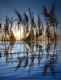 在一个湖的芦苇日落的 免版税库存照片