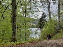 在一个湖边缘的风景一阴天 库存图片