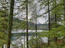 在一个湖边缘的风景一阴天 图库摄影