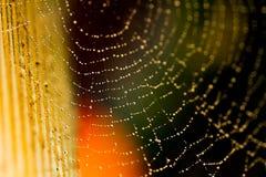 在一个湿和满地露水的网的一只蜘蛛 图库摄影