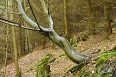 在一个湿山坡的树 免版税库存图片