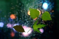 在一个湿窗口的秋叶在多雨天气背景  库存照片