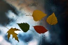 在一个湿窗口的秋叶在多雨天气背景  免版税库存图片