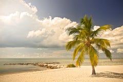 在一个热带天堂的夏天在佛罗里达基韦斯特岛,美国 免版税库存图片