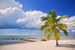 在一个热带天堂的夏天在佛罗里达 免版税库存图片