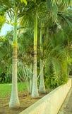 在一个热带庭院的角落的鲜亮的棕榈在霍隆以色列  免版税库存照片