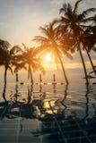 在一个热带手段海滩的日落与棕榈树剪影  自然 库存图片