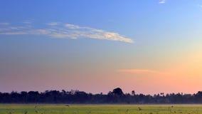 在一个热带村庄的黎明 免版税库存图片
