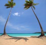 在一个热带海岛上的可可椰子树 库存照片