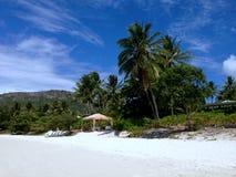 在一个热带海岛海滩的棕榈树 免版税库存照片
