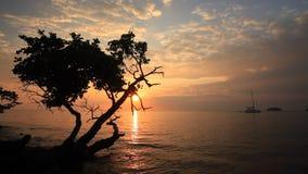 在一个热带海岛的岸的美好的日落 酸值张 股票录像