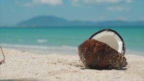 在一个热带海滩特写镜头从棕榈树椰子属于,热的夏天太阳,它被划分成两部分 股票录像