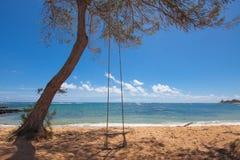 在一个热带海滩的结构树摇摆 免版税库存照片