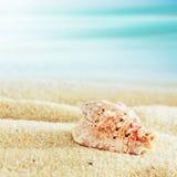 在一个热带海滩的巧克力精炼机壳 免版税图库摄影