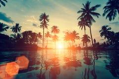 在一个热带海滩的日落与棕榈树剪影反对天空的 库存照片