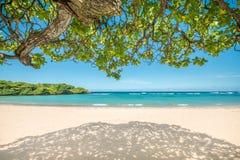 在一个热带海滩的树荫下 免版税库存照片