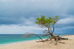 在一个热带海滩的树 免版税图库摄影