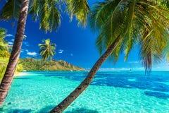 在一个热带海滩的棕榈树与Moorea的,塔希提岛蓝色海 免版税库存图片