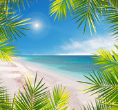 在一个热带海滩的棕榈框架 库存图片
