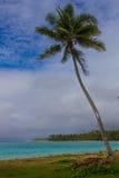 在一个热带海滩的椰子树 免版税库存图片