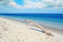 在一个热带海滩的白色漂流木头在一多云天 库存照片