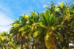 在一个热带海滩,天空的棕榈树在背景中 Summe 免版税图库摄影