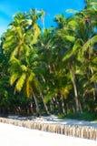 在一个热带海滩,天空的棕榈树在背景中 Summe 库存照片
