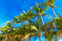 在一个热带海滩,天空的棕榈树在背景中 Summe 库存图片