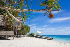 在一个热带白色沙子海滩的果树 免版税库存照片