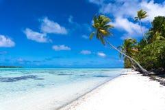 在一个热带白色海滩的长的棕榈树在一个离开的海岛上 库存照片