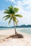 在一个热带idylic沙子海滩的偏僻的棕榈树 免版税库存图片