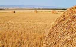 在一个热的夏天领域的干草 免版税库存图片