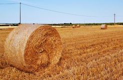 在一个热的夏天领域的干草 免版税库存照片