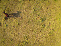 在一个牧场地的鸟瞰图有马的 免版税库存照片