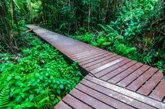 在一个狂放的公园的木走道瀑布的Huay Mae Kamin, 免版税图库摄影