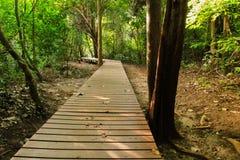在一个狂放的公园的木走道 免版税图库摄影