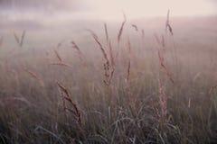 在一个狂放的草甸的秋天干草反对落日的背景在有雾的天气关闭的,抽象秋天 免版税库存照片