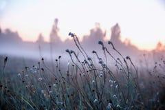 在一个狂放的草甸的秋天干草反对落日的背景在有雾的天气关闭的,抽象秋天 库存照片