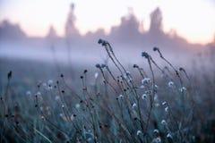 在一个狂放的草甸的秋天干草反对落日的背景在有雾的天气关闭的,抽象秋天 免版税图库摄影