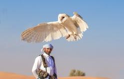 在一个猎鹰训练术飞行展示期间的幼小谷仓猫头鹰在迪拜,阿拉伯联合酋长国 免版税库存图片