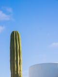 在一个现代大厦下的柱状仙人掌,费埃特文图拉岛,加那利群岛 库存照片