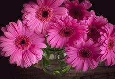 在一个玻璃果酱瓶子的桃红色杰尔米尼花 库存照片
