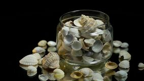 在一个玻璃瓶子的白色贝壳 股票视频