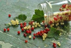在一个玻璃瓶子的红色和白色无核小葡萄干莓果 免版税库存图片
