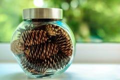 在一个玻璃瓶子的许多杉木锥体有美好的被弄脏的绿色和白色背景 免版税库存图片