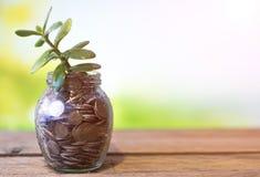 在一个玻璃瓶子的金钱树有在自然被弄脏的背景的硬币的  库存图片
